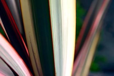 Danske bøger er nu også danske, hvis de udkommer i udlandet